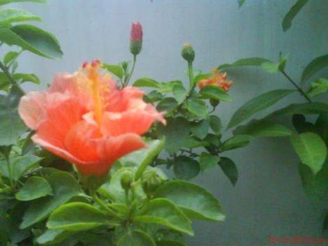 image-upload-63-724181